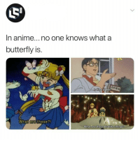 "Anime, Memes, and Butterfly: In anime... no one knows what a  butterfly is  s thisa pigeon?  What are these?!  What are these birdlike things? <p>Is this failure ? via /r/memes <a href=""https://ift.tt/2ICw1bU"">https://ift.tt/2ICw1bU</a></p>"