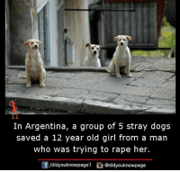 12 year old girl: In Argentina, a group of 5 stray dogs  saved a 12 year old girl from a man  who was trying to rape her.  /didyouknowpage  @didyouknowpage