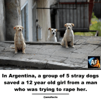 12 year old girl: In Argentina, a group of 5 stray dogs  saved a 12 year old girl from a man  who was trying to rape her.  @amzfacts