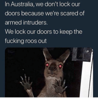 Fucking, Memes, and Australia: In Australia, we don't lock our  doors because we're scared of  armed intruders.  We lock our doors to keep the  fucking roos out My mum once woke up with a crocodile in her backyard when she lived in Darwin...I see the concern
