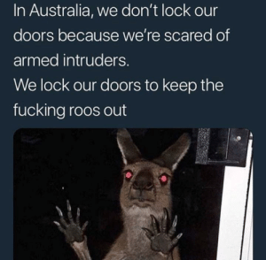 Gotta watch out for em' by PepperSprayP FOLLOW HERE 4 MORE MEMES.: In Australia, we don't lock our  doors because we're scared of  armed intruders  We lock our doors to keep the  fucking roos out Gotta watch out for em' by PepperSprayP FOLLOW HERE 4 MORE MEMES.
