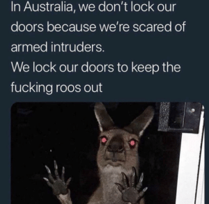 Fucking, Australia, and Fuck: In Australia, we don't lock our  doors because we're scared of  armed intruders.  We lock our doors to keep the  fucking roos out The roos don't fuck around