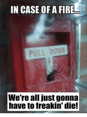 9gag, Fire, and Meme: IN CASE OF A FIRE  PULL BOWN  We're all just gonna  have to freakin' die! Insert I guess Ill die meme - 9GAG