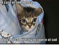 lol cats: In case of Emergency  Apply LOL cat directly to Source of Sad