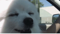 in case you are wondering, yes, gabe the dog is a shoob: in case you are wondering, yes, gabe the dog is a shoob