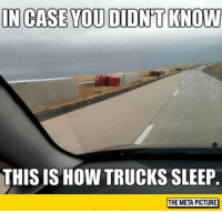 """Tumblr, Blog, and Sleep: IN CASE YOU DIDN'T KNOW  THIS IS HOW TRUCKS SLEEP  THE META PICTURE <p><a href=""""https://epicjohndoe.tumblr.com/post/172810533004/such-majestic-creatures-in-their-natural-habitat"""" class=""""tumblr_blog"""">epicjohndoe</a>:</p>  <blockquote><p>Such Majestic Creatures In Their Natural Habitat</p></blockquote>"""