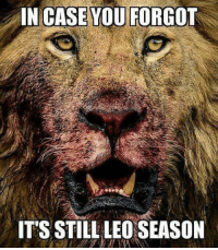 Happy birthday to August 12 !   Oh yeah, in case anyone forgot, please see the attached image: IN CASE YOU FORGOT  IT'S STILL LEO SEASON Happy birthday to August 12 !   Oh yeah, in case anyone forgot, please see the attached image