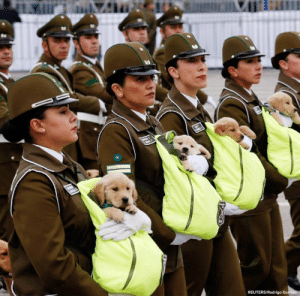 In Chile, there is an annual military parade where troops of adorable police puppies steal the show as officers march with the pups in pouches. The dogs are being trained in the Canine Unit of the country's national police force.Via @abcnews: In Chile, there is an annual military parade where troops of adorable police puppies steal the show as officers march with the pups in pouches. The dogs are being trained in the Canine Unit of the country's national police force.Via @abcnews