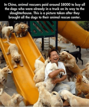 omg-humor:  Dog rescue.: In China, animal rescuers paid around $8000 to buy all  the dogs who were already in a truck on its way to the  slaughterhouse. This is a picture taken after they  brought all the dogs to their animal rescue center. omg-humor:  Dog rescue.
