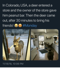 Got anymore?: In Colorado, USA, a deer entered a  store and the owner of the store gave  him peanut bar. Then the deer came  out, after 30 minutes to bring his  friends! #Monday  11/18/18, 10:06 PM Got anymore?