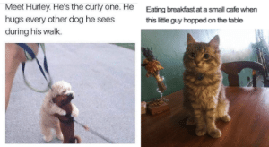In days of worldwide uncertainty and fear, these animal memes will put an instant smile on your face and will allow your mind off the news, even if it's just for a few minutes. #wholesome #wholesomememes #wholesomeanimals #animalmemes #cuteanimals: In days of worldwide uncertainty and fear, these animal memes will put an instant smile on your face and will allow your mind off the news, even if it's just for a few minutes. #wholesome #wholesomememes #wholesomeanimals #animalmemes #cuteanimals