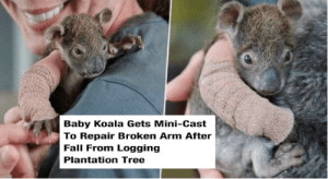 In days of worldwide uncertainty and fear, these animal memes will put an instant smile on your face and will allow your mind off the news, even if it's just for a few minutes. #cats #dogs #wholesome #wholesomememes #wholesomeanimals #cuteanimals: In days of worldwide uncertainty and fear, these animal memes will put an instant smile on your face and will allow your mind off the news, even if it's just for a few minutes. #cats #dogs #wholesome #wholesomememes #wholesomeanimals #cuteanimals