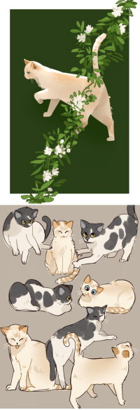 Cats, Tumblr, and Blog: In  eL 6oys: @cookietsune is always sending me pics of his cats