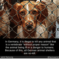 "Facts, Tumblr, and Weird: In Germany, it is illegal to kill any animal that  is a vertebrate ""without proper reason"" like  the animal being ill or a danger to humans.  Because of this, all German animal shelters  are no-kill  weird-facts.org  @factsweird mindblowingfactz:  In Germany, it is illegal to kill any animal that is a vertebrate ""without proper reason"" like the animal being ill or a danger to humans. Because of this, all German animal shelters are no-kill."