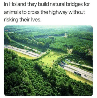 Animals, Instagram, and Meme: In Holland they build natural bridges for  animals to cross the highway without  risking their lives @pubity was voted 'best meme account on Instagram' 😂
