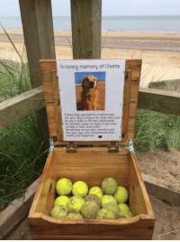 This is so damn wholesome: In loving memory of Charlie  Please help yourself to a tennis ball  for your dog to enjoy You may also wish  to pop it back in the box afterwards  for another pooch to enjoy If you wish  to keep it then thats fire  Remember to live each moment just  with unconditional  and happiness This is so damn wholesome