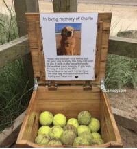 Proper dog memorial: In loving memory of Charlie  Please help yourself to a tennis bal  your dog to enjoy You may also wish  to pop it back in the box afterwards  for another pooch to erjoy If you wmsh  to Keep it then thars fine  Remember to live each moment just  e your dog with unconditional  oyalty and happiness *  omedySlam Proper dog memorial