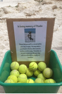 <p>Man Makes A Memorial To Honor His Best Friend.</p>: In loving memory of Phoebe  Please help yourself to a tennis ball for  your dog to enjoy. You may wish to  pop t back in the box afterwards for  another pooch to enjog. Remember to  live eaoh moment just like your dog;  with unoonditional love, logalty and  happiness. <p>Man Makes A Memorial To Honor His Best Friend.</p>