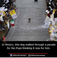 Memes, Pope Francis, and Mexico: In Mexico, this dog walked through a parade  for the Pope thinking it was for him.  /didyouknowpagel @didyouknowpage