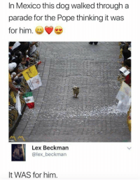 Funny, Pope Francis, and Happy: In Mexico this dog walked through a  parade for the Pope thinking it was  for him.  > C  Lex Beckman  @lex_beckman  It WAS for him. This pup looks so happy! https://t.co/V331NhD1uN