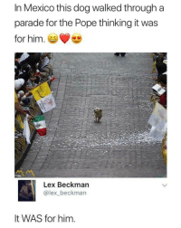 Pope Francis, Respect, and Mexico: In Mexico this dog walked through a  parade for the Pope thinking it was  for him.  Lex Beckman  @lex_beckman  It WAS for him. I have the upmost respect for MY president