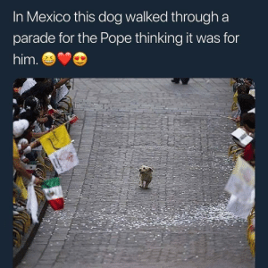 Pope Francis, Mexico, and Dog: In Mexico this dog walked through a  parade for the Pope thinking it was for  him. They say the parade was for the pope…