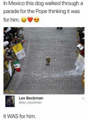 He deserves it more: In Mexico this dog walked through a  parade for the Pope thinking it was  for him.  Lex Beckman  @lex_beckman  It WAS for him. He deserves it more