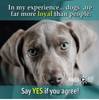 Memes, 🤖, and Loyal: In my experience... dogs are  far more loyal than people.  Say YES if you agree! I wholeheartedly agree 😍 ❤Puggy❤