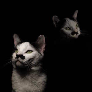 In my free time I set up a little studio in my room and made this 80s style portrait of my cat; lol. Please appreciate my effort: In my free time I set up a little studio in my room and made this 80s style portrait of my cat; lol. Please appreciate my effort