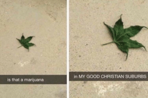 Good, Marijuana, and Suburbs: in MY GOOD CHRISTIAN SUBURBS  is that a marijuana