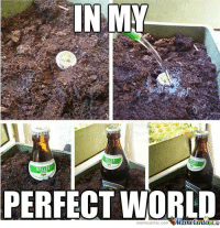 Memes, 🤖, and Mine: IN MY  PERFECT WORL  memecenter-com  Mine Centera In a perfect world... #beer