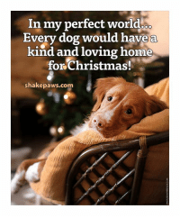 Memes, 🤖, and Perfect World: In my perfect world  OO  Every dog would have a  kind and loving home  for Christmas!  shakepaws.com