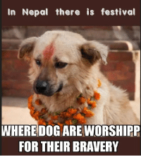 They are all good boys  girls!: In Nepal there is festival  WHERE DOG ARE WORSHIPP  FOR THEIR BRAVERY They are all good boys  girls!