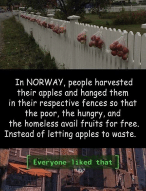 Homeless, Hungry, and Free: In NORWAY, people harvested  their apples and hanged them  in their respective fences so that  the poor, the hungry, and  the homeless avail fruits for free.  Instead of letting apples to waste.  Everyone liked that Paying it forward, Norway Style