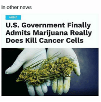 🙌 @TheDailyChief420: In other news  MEDIA  Government Finally  U.S.  Admits Marijuana Really  Does Kill Cancer Cells 🙌 @TheDailyChief420