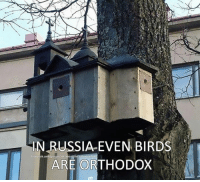 Looks like Orthodoxy is inter-species now :v  ~Inquisitor: IN RUSSIA EVEN BIRDS  facebook.com/groups/ask about he orthodox faith  ARE ORTHODOX Looks like Orthodoxy is inter-species now :v  ~Inquisitor