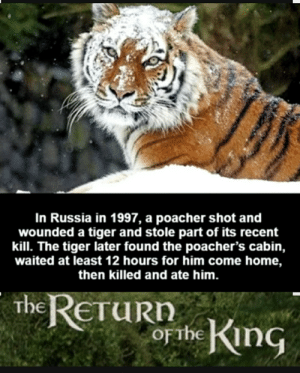 Reddit, Home, and Russia: In Russia in 1997, a poacher shot and  wounded a tiger and stole part of its recent  kill. The tiger later found the poacher's cabin,  waited at least 12 hours for him come home,  then killed and ate him.  the RETURN  o the King Get nae nae'd