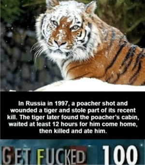 Memes, Taken, and Home: In Russia in 1997, a poacher shot and  wounded a tiger and stole parrt of its recent  kill. The tiger later found the poacher's cabin,  waited at least 12 hours for him come home,  then killed and ate him.  100  GET FUCKED They still dont get it. (Taken from r/memes)