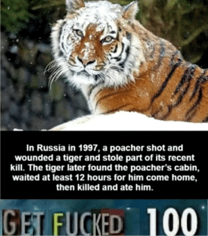 Dank, Memes, and Target: In Russia in 1997, a poacher shot and  wounded a tiger and stole part of its recent  kill. The tiger later found the poacher's cabin,  waited at least 12 hours for him come home,  then killed and ate him.  100  GET FUCKED Well that is Russia for ya by ggbutnotreally MORE MEMES