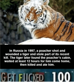 Home, Russia, and Tiger: In Russia in 1997, a poacher shot and  wounded a tiger and stole part of its recent  kill. The tiger later found the poacher's cabin,  waited at least 12 hours for him come home,  then killed and ate him.  GET FUCKED  100 *blows air horn* get fucked
