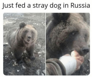 In Russia stray dog feeds you https://t.co/rKVvO9EYFb: In Russia stray dog feeds you https://t.co/rKVvO9EYFb