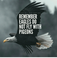 Memes, Eagle, and Big E: IN S T A G R A M I BIG E M P I R E  REMEMBER  EAGLES DO  NOT FLY WITH  PIGEONS https://t.co/jhQ6pdPoDq