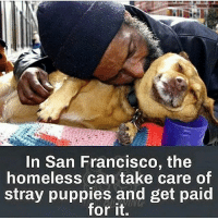 This is definitely a Win-Win! 🙌🏼🐶🙌🏼 • Repost @animalrevenge ・・・ Like this? Comment below😚 San Francisco is initiating a new program August 1, believed to be the first of its kind in the country. WOOF (Wonderful Opportunities for Occupants and Fidos) encourages homeless individuals to give up panhandling. In exchange, they'll receive a small stipend to foster problematic puppies until they're ready for adoption. from @homelessfriend The goal is to try to help both the city and its animals. San Francisco Animal Care and Controlwill screen potential foster parents to ensure that they are a good fit for the program. They must live in supportive housing, not on the streets, and prove they are not severely mentally ill, aren't hoarders, don't have a history of violence and aren't seeking treatment for addictions. In exchange, the approved applicant will receive $50-$75 a week, as well as several training sessions, regular check-ins, and all the dog food, toys, leashes and veterinary care they need, provided by Animal Care and Control. Follow @HomelessFriend . HomelessFriend SpreadPeaceUSA EndHomelessness homeless bestof bethechange veganvip happydogs shelterdogs heartwarming adoption adoptdontshop igdogs dog dogs dogsofinstagram dogsofinstgram dogstagram: In San Francisco, the  homeless can take care of  stray puppies and get pai  for it. This is definitely a Win-Win! 🙌🏼🐶🙌🏼 • Repost @animalrevenge ・・・ Like this? Comment below😚 San Francisco is initiating a new program August 1, believed to be the first of its kind in the country. WOOF (Wonderful Opportunities for Occupants and Fidos) encourages homeless individuals to give up panhandling. In exchange, they'll receive a small stipend to foster problematic puppies until they're ready for adoption. from @homelessfriend The goal is to try to help both the city and its animals. San Francisco Animal Care and Controlwill screen potential foster parents to ensure that they are a good fit for the program. They must live in supportive housing, not on the streets, and prove they are not severely mentally ill, aren't hoarders, don't have a history of violence and aren't seeking treatment for addictions. In exchange, the approved applicant will receive $50-$75 a week, as well as several training sessions, regular check-ins, and all the dog food, toys, leashes and veterinary care they need, provided by Animal Care and Control. Follow @HomelessFriend . HomelessFriend SpreadPeaceUSA EndHomelessness homeless bestof bethechange veganvip happydogs shelterdogs heartwarming adoption adoptdontshop igdogs dog dogs dogsofinstagram dogsofinstgram dogstagram