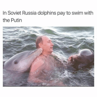 soviet russia: In Soviet Russia dolphins pay to swim With  the Putin