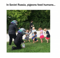 in soviet russia: In Soviet Russia, pigeons feed humans...