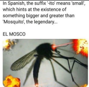 Spanish, Animal, and Spirit: In Spanish, the suffix -ito' means 'small',  which hints at the existence of  something bigger and greater than  Mosquito, the legendary...  EL MOSCO El mosco is my spirit animal