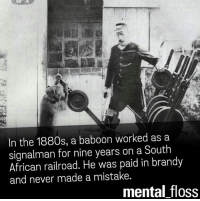 say what!: In the 1880s, a baboon worked as a  signalman for nine years on a South  African railroad. He was paid in brandy  and never made a mistake.  mental floss say what!