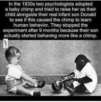 Memes, 🤖, and Psychologist: In the 1930s two psychologists adopted  a baby chimp and tried to raise her as their  child alongside their real infant son Donald  to see if this caused the chimp to learn  human behavior. They stopped the  experiment after 9 months because their son  actually started behaving more like a chimp. Madness repost @chididdy26