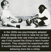 Memes, 🤖, and Human: In the 1930s two psychologists adopted  a baby chimp and tried to raise her as their  child alongside their real infant son Donald to  see if this caused the chimp to learn human  behavior. They stopped the experiment after  9 months because their son actually started  behaving more like a chimp.