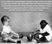 Memes, Baby, and 🤖: In the 1930s two psychologists adopted a baby chimp and tried  to raise her as their child alongside their real infant son Donald  to see if this caused the chimp to learn human behavior. They  stopped the experiment after 9 months because their son  actually started behaving more like a chimp https://t.co/9GgFUwx4Fm